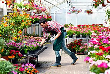 Produktgruppe - Blumen und Zierpflanzen