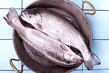 Produktgruppe - Fisch